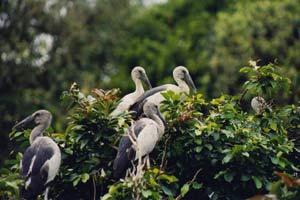 Birds Sanctuary, Someshawara