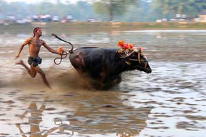 Vandaru Kambala